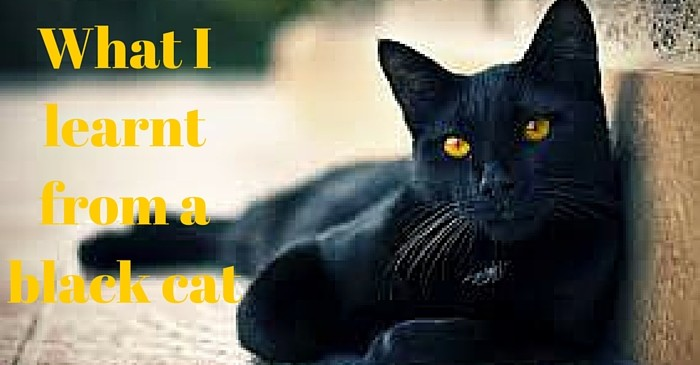 What a black cat taught me
